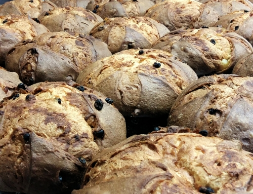 Homemade panettone: started our production in Impruneta